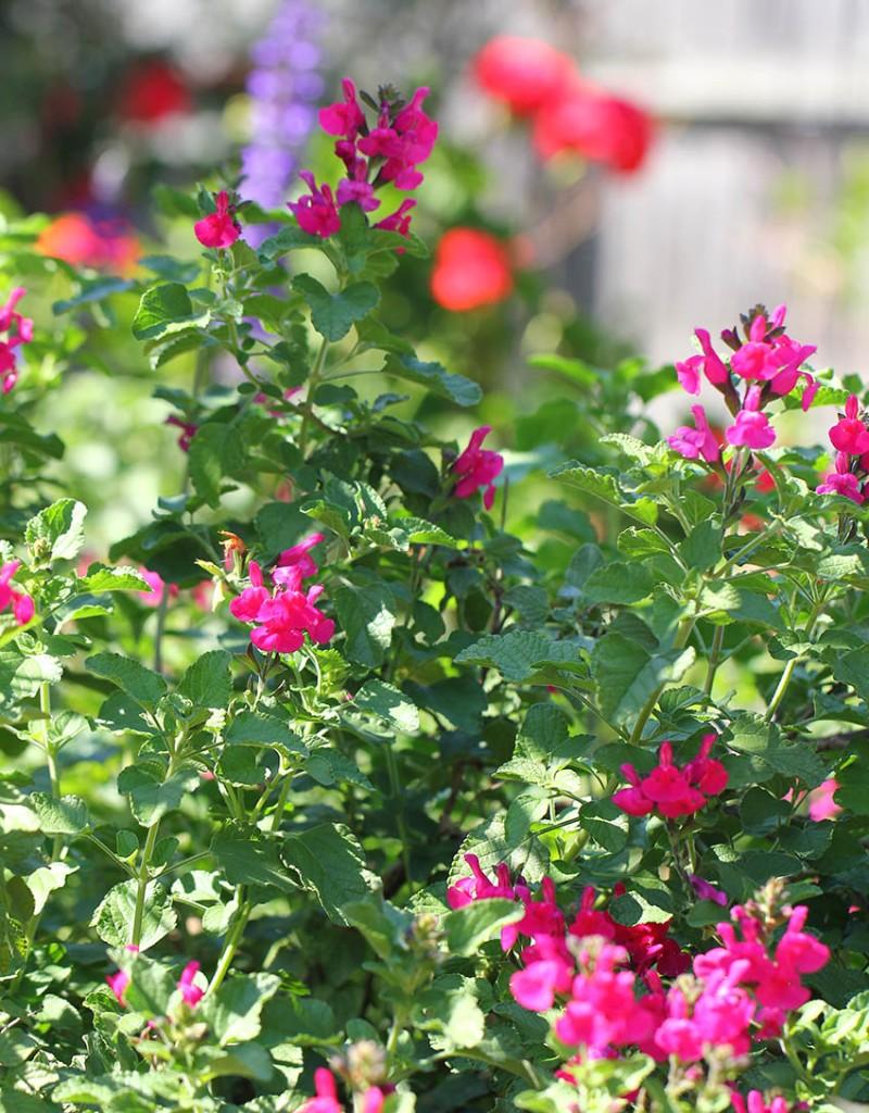 Garden -Lilibet Stanley