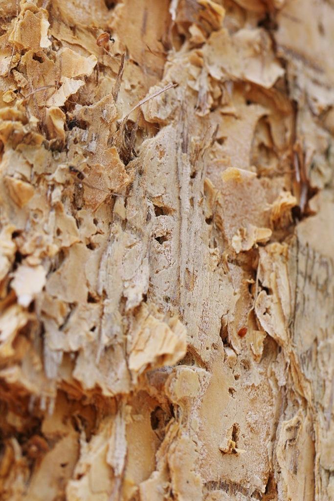 paper bark-Lilibet Stanley