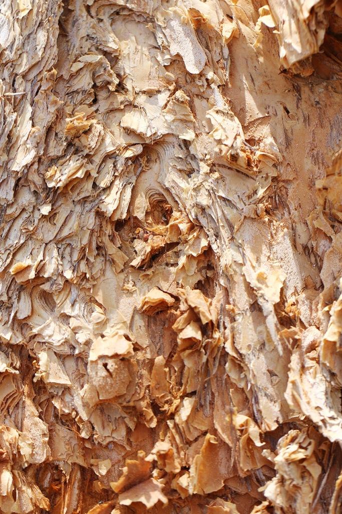 paper bark1-Lilibet Stanley