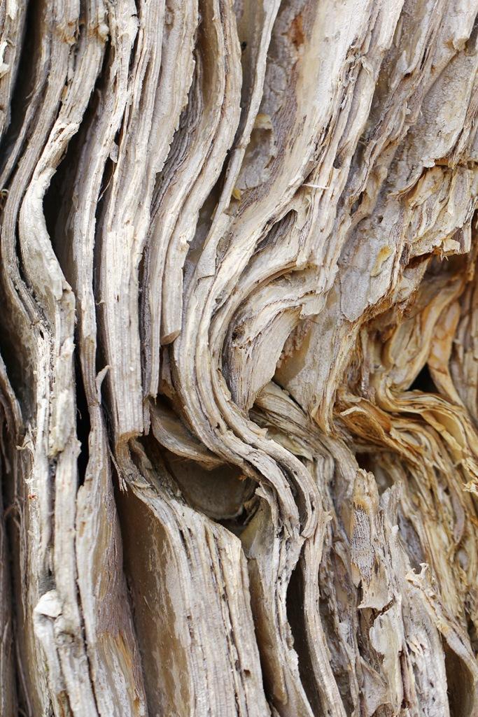 paper bark3-Lilibet Stanley