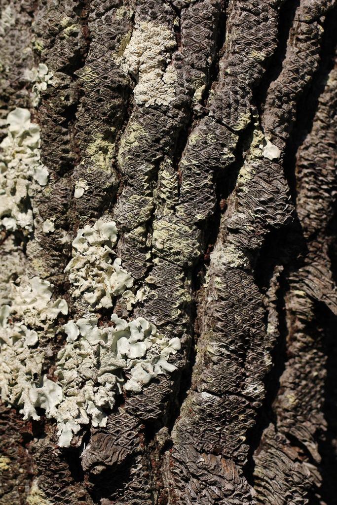 tree bark4