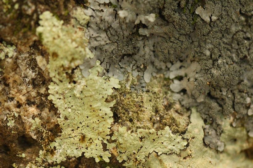 lichen-Lilibet Stanley